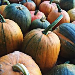 wapautumn pumpkin weekend freetoedit