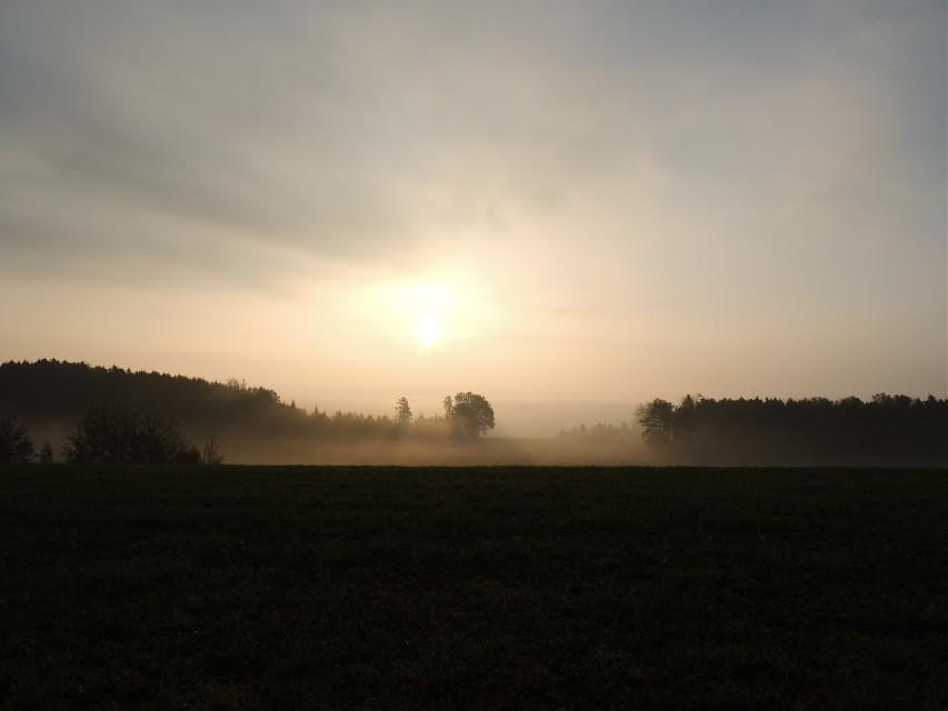 #emotions #nature #photography #oldphoto #oldphoto #photography #autumn #drama #sunlights #tree #tree #tree