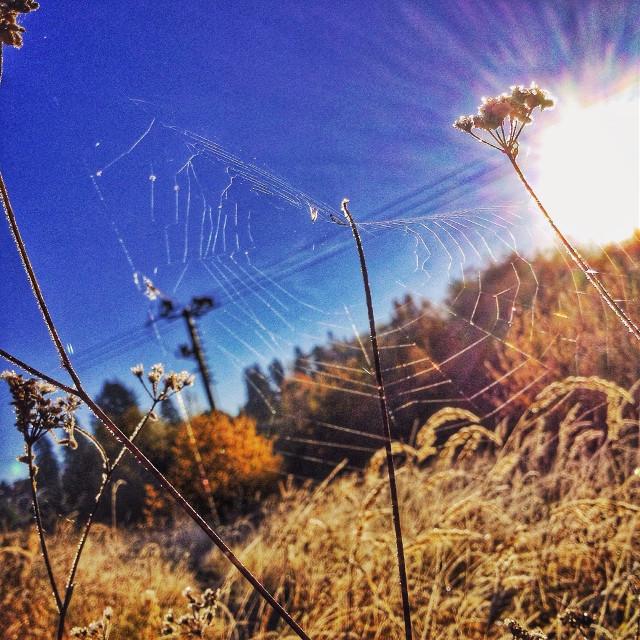 #spiderweb #sunnyday #morning #nature #hdr #sky #autumn