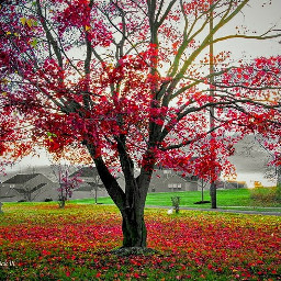 colorful nature red green trees