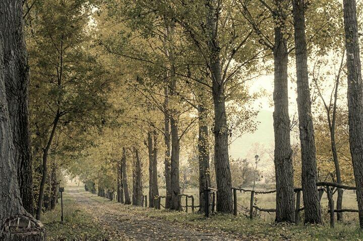 #nature  #vintage
