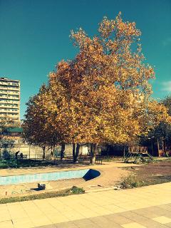 nature tree yerevan armenia park