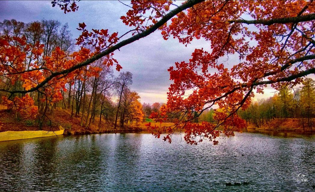 #autumn #lake #tree #colorful # photography