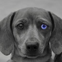 cute blue puppy