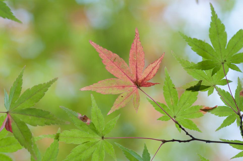 #nature#forest#autumn