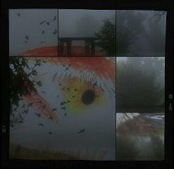 collage eye photography nature fog