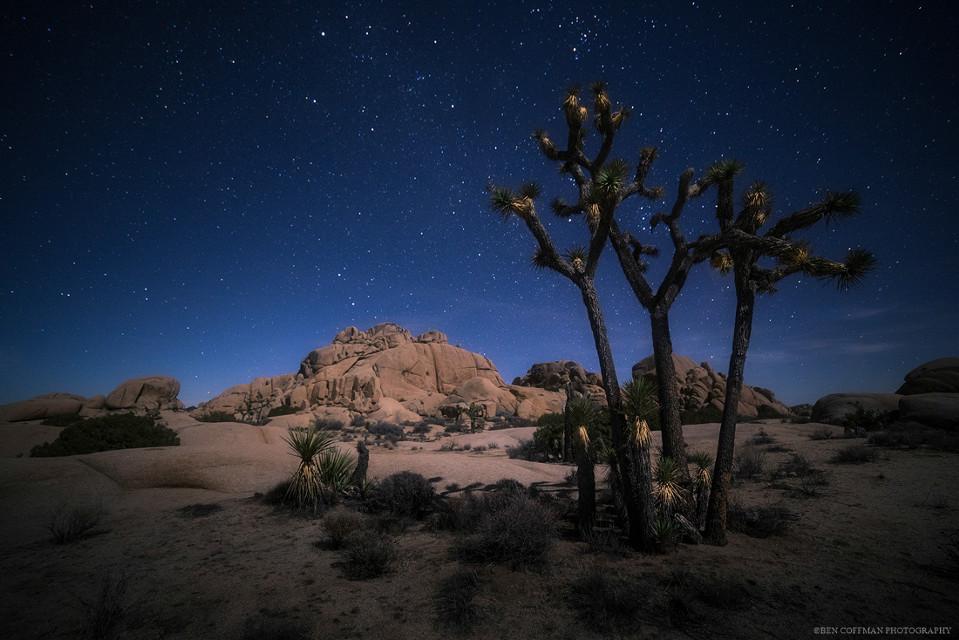 """Joshua Trees and stars,"" from a freezing winter morning at Joshua Tree NP."