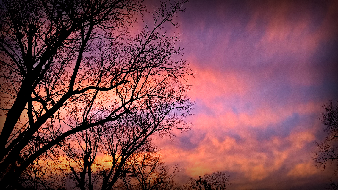 A real beauty of a sunset tonight, and of course I ran out of batteries... Thank goodness for camera phones! [*F] #freetoedit #photography #sunset #tree #silhouette #camera #colorful #vignette #camera phone #phone