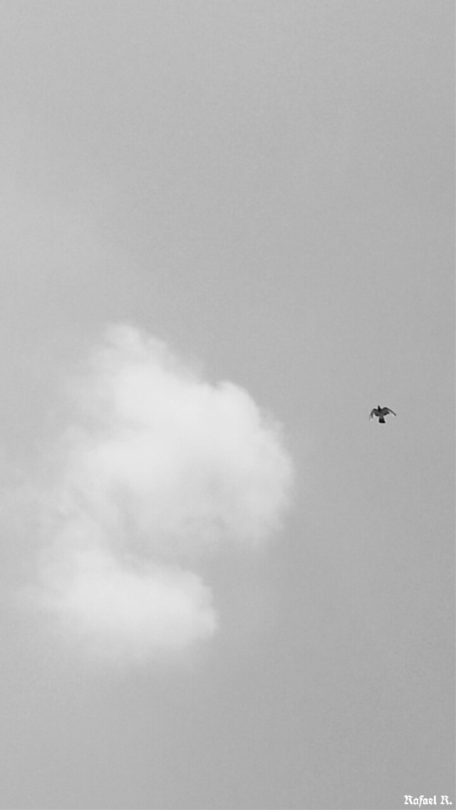 El cielo resplandece a mi alrededor.... #blackandwhite #sky #bird #ave #cielo