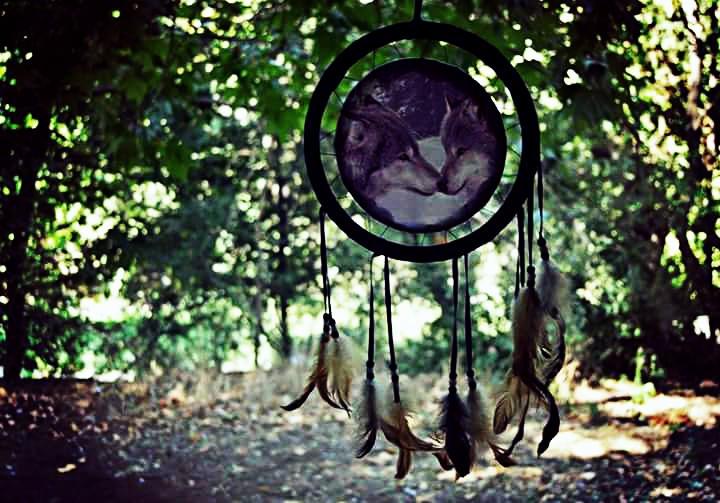 #dreamcatcher #wolf  #nature #ilikeit