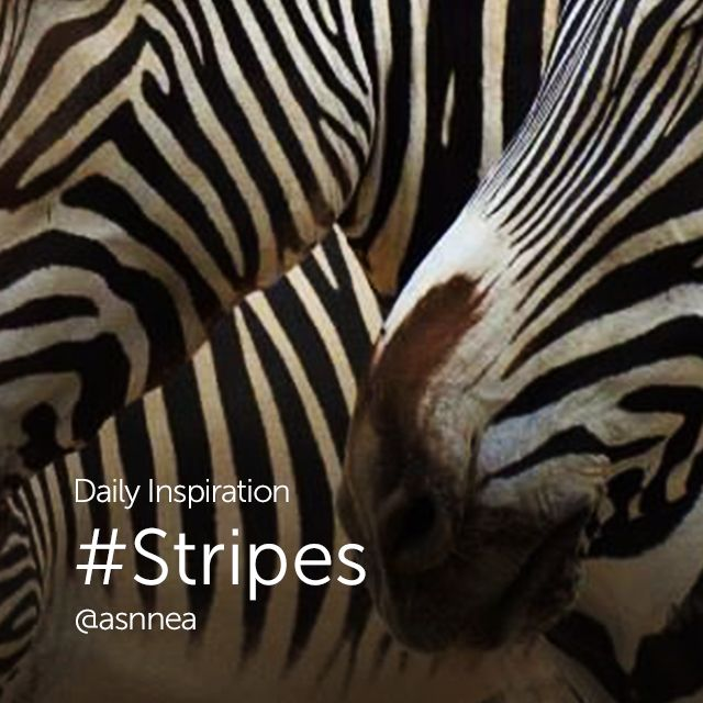 stripes pictures