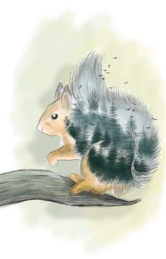wdptreeline squirrel wild animal tree