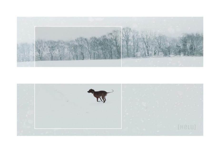 Happy weekend dear PA family :)    #diptych #dailyinspiration #winter #snow #winterfun #dogs