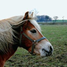horse photography petlove