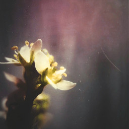 photography littleflower macro_vision colorful obscure