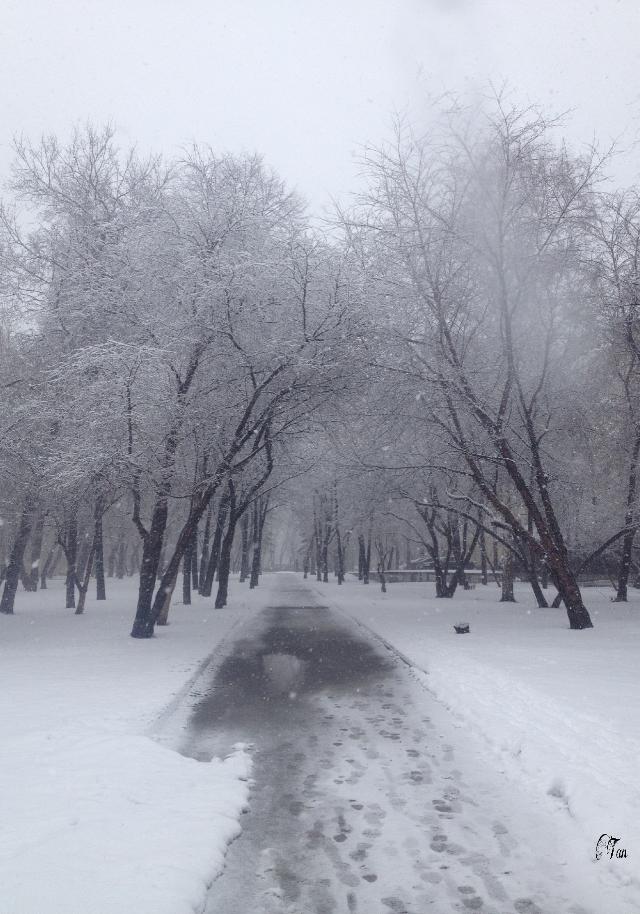 #snow #tree #freetoedit #nofilter #emotion