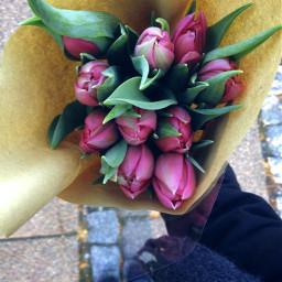 flowers tulips nature beautiful