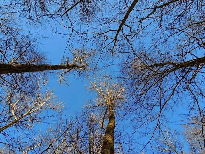 Schau immer nach oben.   #Wald #Forest #Winter  #Himmel