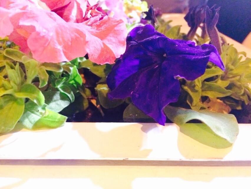 #flowers #beautiful #colorful #parfum #artistc