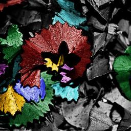 wapaddcolor