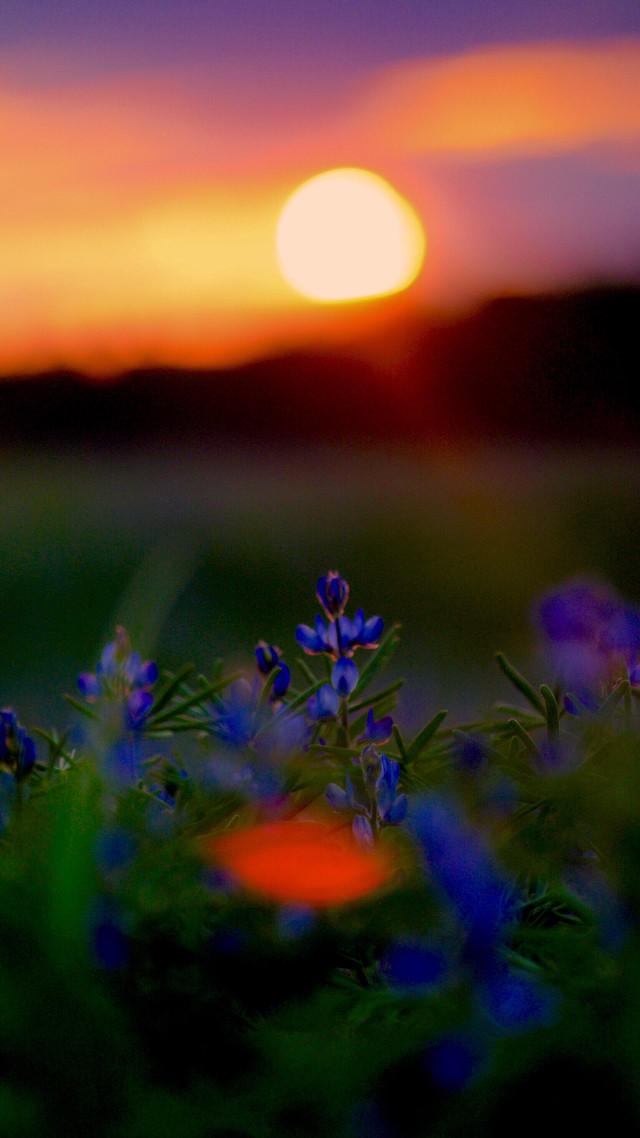 #flowers #sunset #wppnature