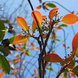 brightbackground spring sky lookup orange