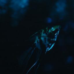photography fishes aquarium jammu colorsplash