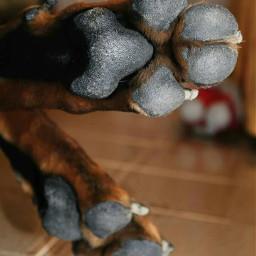 bart doberman dog love missu