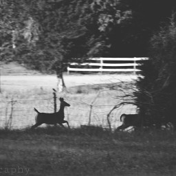 wppnature nature deer run poem