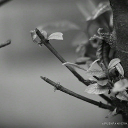 blackandwhite photography summer nature