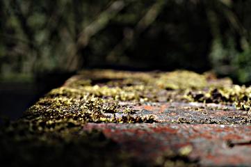 macro moss wall hdr